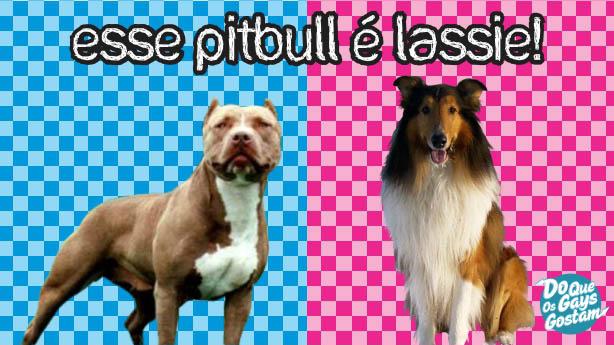 Esse pitbull é lassie - Do Que Os Gays Gostam