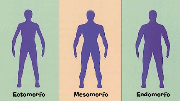 Tipo Físico Mesomorfo, Endomorfo ou Ectomorfo?